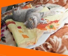 кот и электрическая грелка